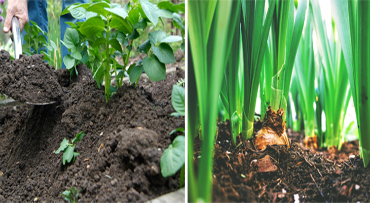 Earthing Up In the Plants   पौधों में मिट्टी चढ़ाना