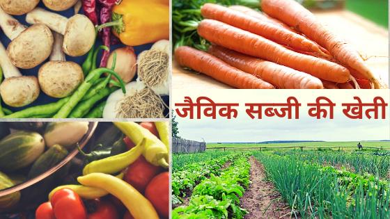 Organic vegetable farming-जैविक सब्जी की खेतीक-सब्जी-की-खेती
